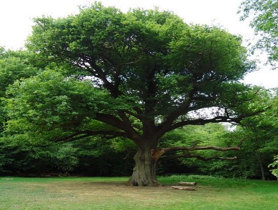 Stejarul 2-550x415