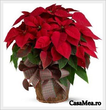 www.casamea.ro