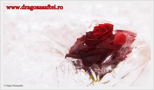 www.dragosasaftei.ro