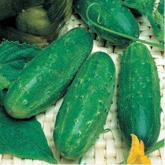 seminte-castraveti-cornichon-levina-f1~136